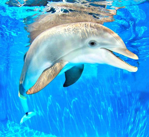 Clearwater Marine Aquarium in Clearwater Beach Florida