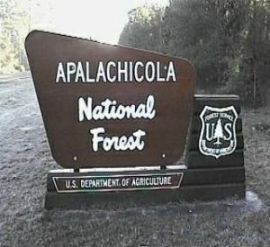 Apalachicola National Forest in Apalachicola Florida