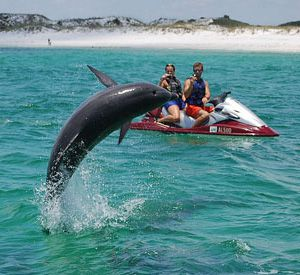 Bay Point Watersports in Panama City Beach Florida