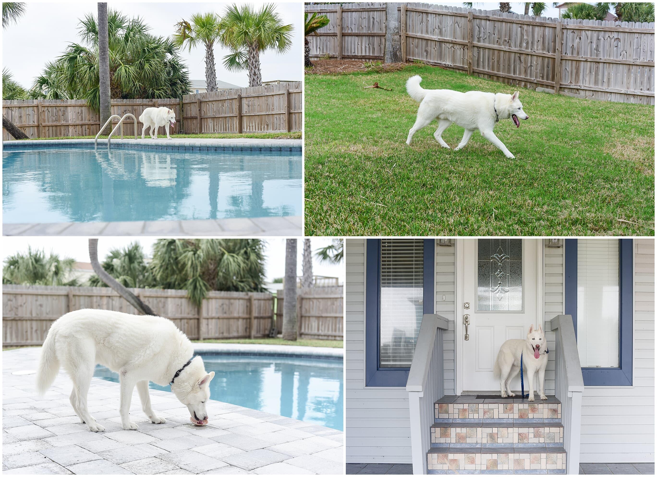 Panferio 907 House/Cottage rental in Pensacola Beach House Rentals in Pensacola Beach Florida - #2