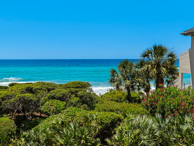 Beachcrest 206 Condo rental in Beachcrest Condos ~ Seagrove Beach Condo Rentals by BeachGuide in Highway 30-A Florida - #5