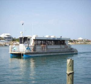 Blue Dolphin in Orange Beach Alabama