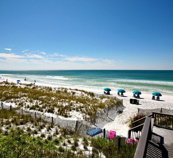 The beach dunes at Crystal Sands East and West Condominiums   in Destin Florida