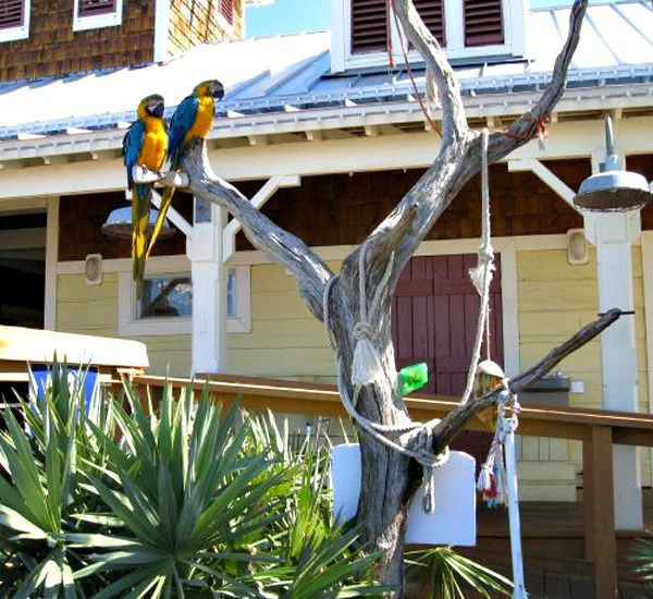 Two parrots sitting in a tree outside a shop at the Village of Baytowne Wharf courtesy of Gulf Winds East Destin FL