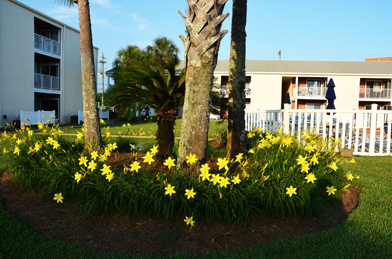 Tradewinds Condos ~ Destin Florida Condo Rentals ~ BeachGuide