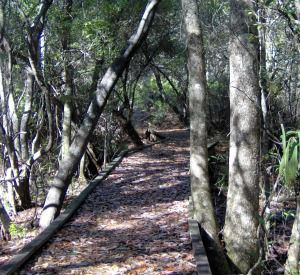 Eastern Lake Bike & Hike Trail in Highway 30-A Florida