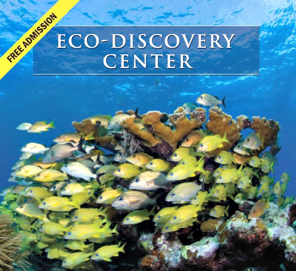 Eco-Discovery Center in Key West Florida