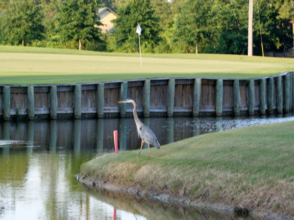 Gulf Shores Golf Club in Gulf Shores Alabama