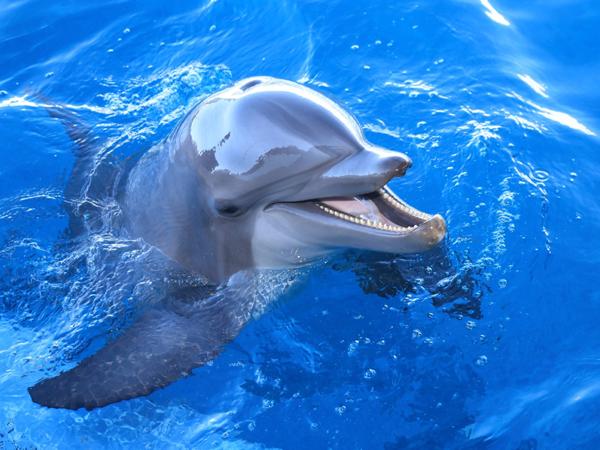 Gulf World Marine Park in Panama City Beach Florida