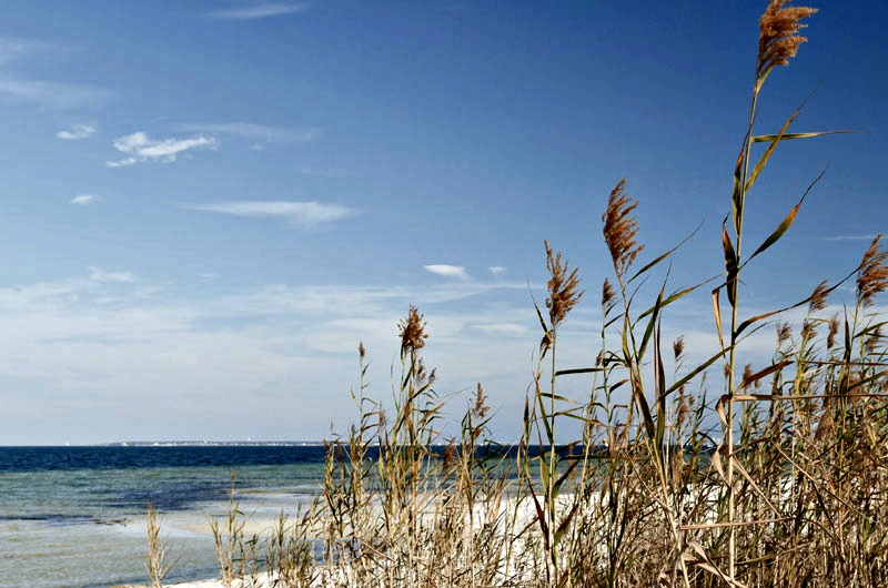 Sea oats and beach view at Watersound FL