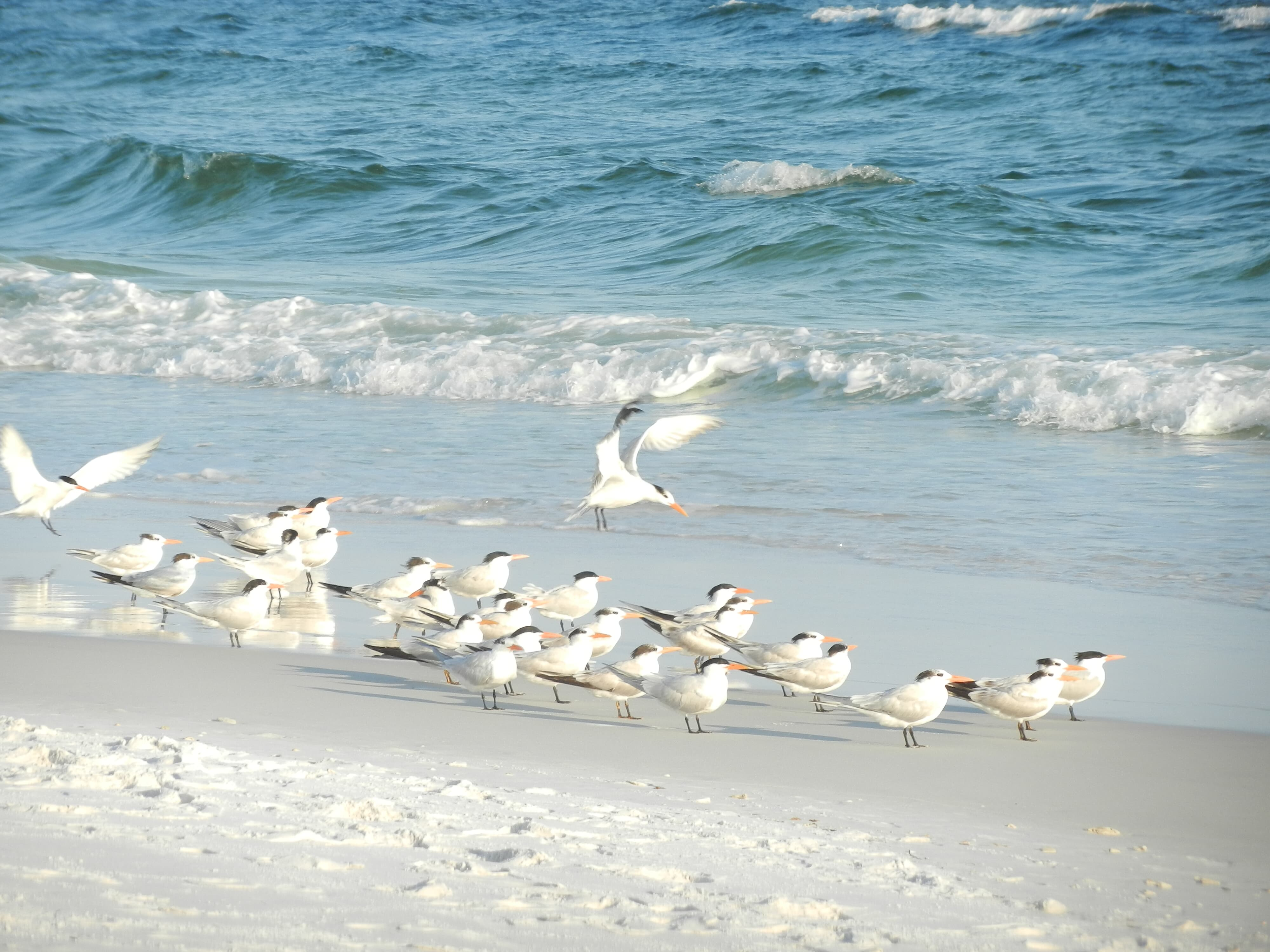 Holiday Surf & Racquet Club 612 Condo rental in Holiday Surf & Racquet Club in Destin Florida - #4
