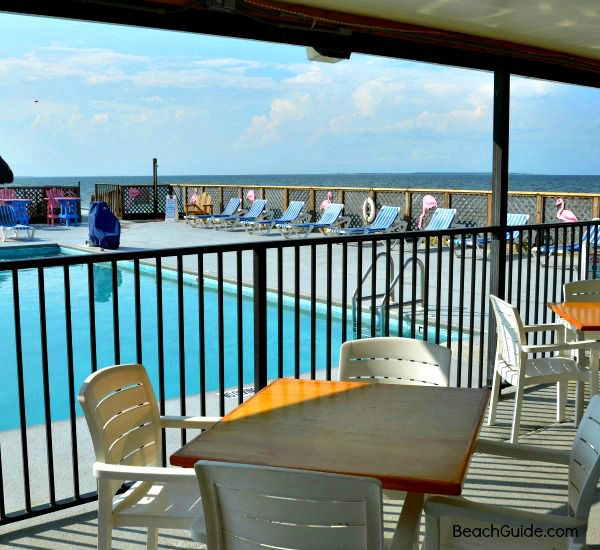 Beach House Pet Friendly Rentals: Hotel With Beachfront Pool And Bar