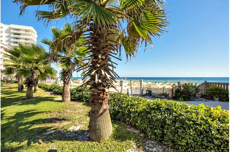 Palm Trees on the beach at Seascape in Orange Beach AL