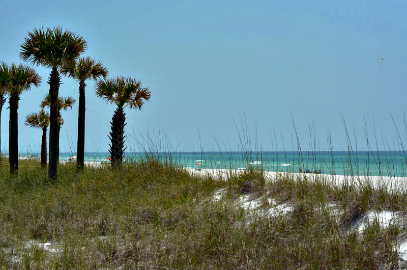 Palm Trees on the beach at The Shores in Panama City Beach FL