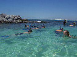 Pelican Adventures in Destin Florida