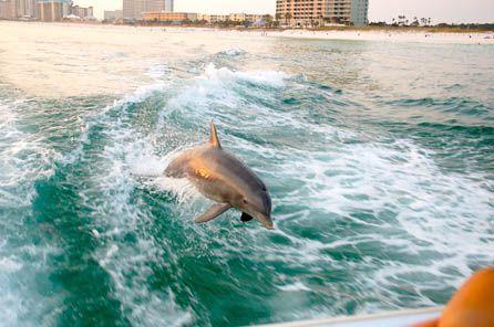 Sea Screamer Dolphin Cruise in Panama City Beach Florida