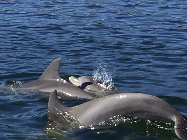 Shell Island and Dolphin Tours in Panama City Beach Florida
