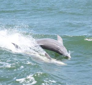 Southern Rose Dolphin & Dining Cruises  in Orange Beach Alabama
